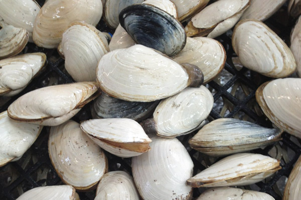 Clams, Economy and Land Use